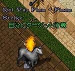 Pet_1